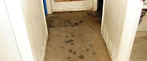 Water Damage Carpet Mold  Carpet Vidalondon