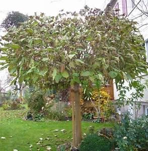 Kugel Trompetenbaum Schneiden : trompetenbaum schneiden kugel trompetenbaum pflege ~ Lizthompson.info Haus und Dekorationen