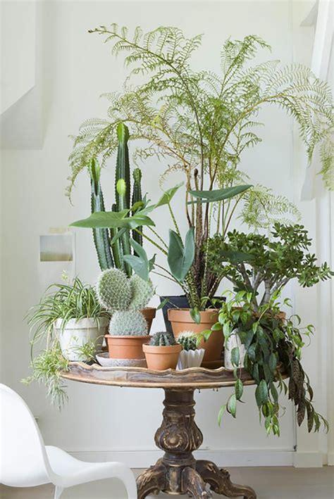 happy living room ideas  plants modern home decor