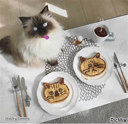 Morning Breakfast Cat