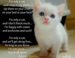 cat love quotes - Google Search | Inspirational Animal ...