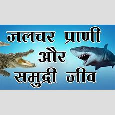 Sea Animals Pictures With Names In Hindi Imaganationfaceorg