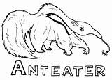 Anteater Coloring Ant Eater Animal Printable Template Animals Sheets Sheet sketch template