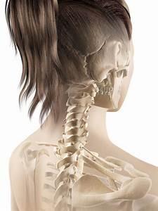 Cervical Spine Anatomy  Neck