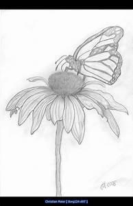 butterfly_on_flower.jpg (708×1100)   Art - Sketch ...