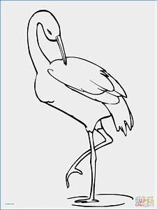 flamingo beak template gallery template design ideas With flamingo beak template