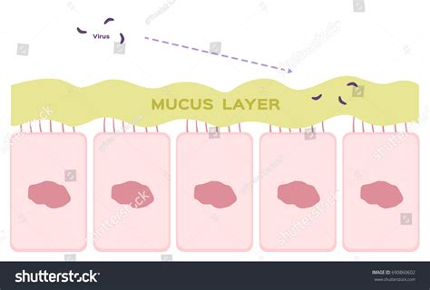 Nasal Mucosa Cells Nose Vector Mucus Stock Vector