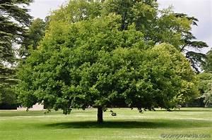 Quel Arbre Planter Près D Une Maison : role et fonctionnement des arbres ~ Dode.kayakingforconservation.com Idées de Décoration