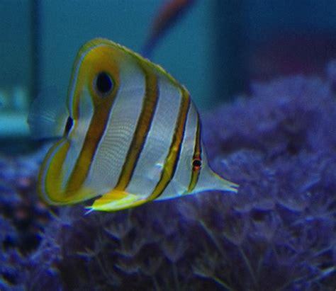tropicalfish 77 eau de mer poissons eau de mer