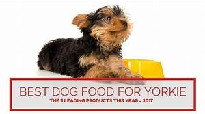 best dog food for yorkie the five leading products this With best wet dog food for yorkies