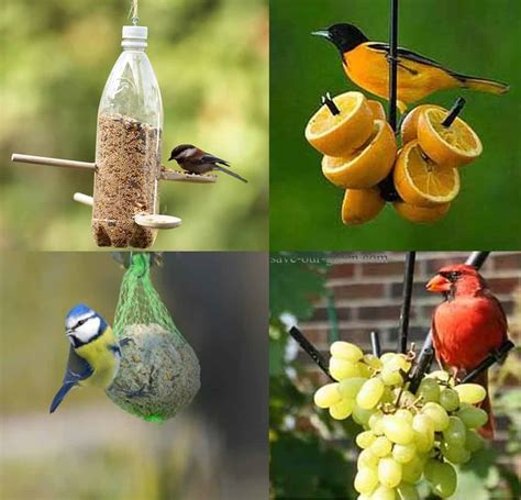 homemade bird feeder save our green