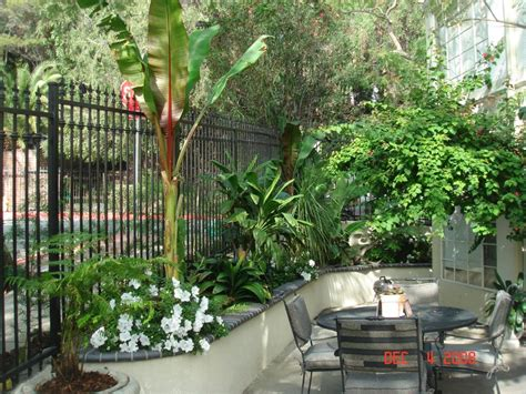 minimalist small tropical garden design  necessarily hardy  zone  tropical garden