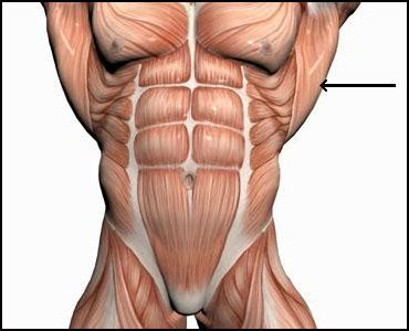 Intramuscular Injections (IM) - Lats • HowToDoInjections.com