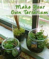 make your own terrarium 27 best images about Terrariums on Pinterest | Gardens ...