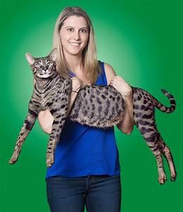 Worlds Tallest Cat 2017