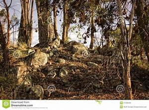 Forest Undergrowth At Sunset Royalty Free Stock Images