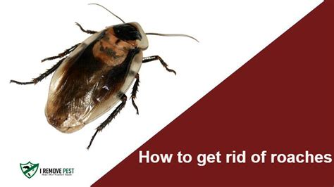 how to get rid of cockroaches in kitchen cabinets how to get rid of roaches for good insecticides traps