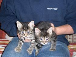 Katzen Fernhalten Von Möbeln : katzen ~ Michelbontemps.com Haus und Dekorationen