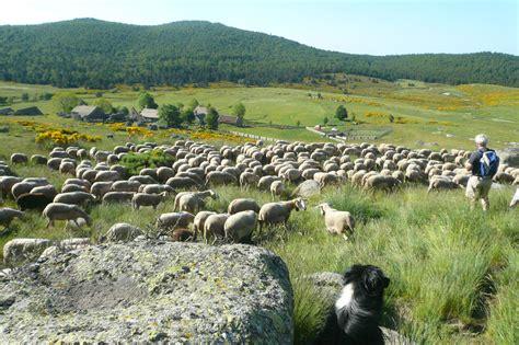 chambre agriculture lozere espaces pastoraux collectifs copage
