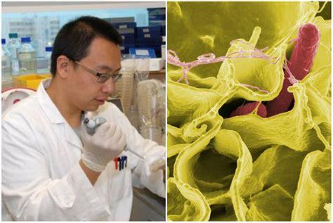 hku researchers engineer salmonella bacteria  kill cancer cells coconuts hong kong