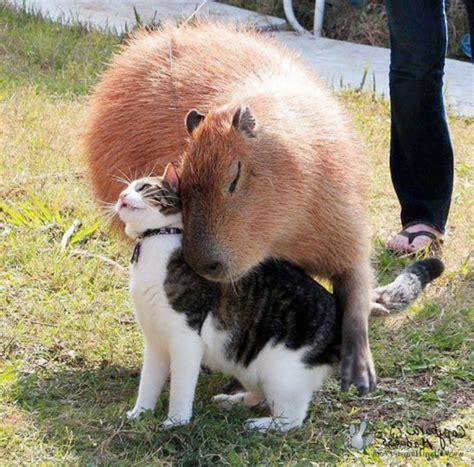 animal friendships     melt