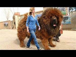 ✔ Funny Dogs What Dog Breed is Best For You