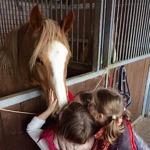 Wie Viele Runden Gibt Es Beim Boxen : vor und nachteile von paddocktrails a life with horsesa life with horses ~ Watch28wear.com Haus und Dekorationen