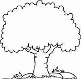 Coloring Tree Palm Trees Kindergarten sketch template