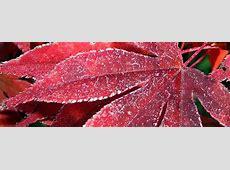 Herbst FacebookTitelbilder kostenlos herunterladen