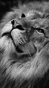 Lion Wallpaper Iphone Mac Os X 10