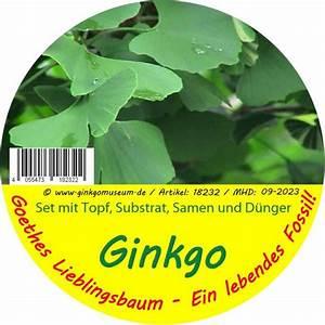 Ginkgo Samen Kaufen : ginkgo samen kaufen ~ Lizthompson.info Haus und Dekorationen