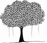 Banyan Tree Canopy Leafy Vector Trees Shade Pixabay Plant Donate Say sketch template