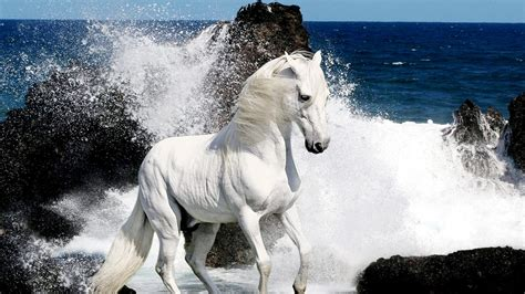 White Horses Hd Wallpapers