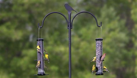 bird feeder pole advanced pole system birds unlimited birds