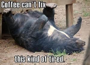 Coffee Meme #Bear, #Tired | Words of Wisdom | Pinterest