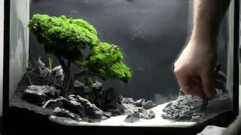 bonsai aquarium acquario bonsai step  step cube
