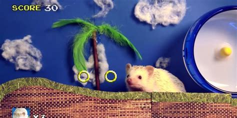 Sonic The Hedgehog In Real Life Is Much Cuter Huffpost Uk