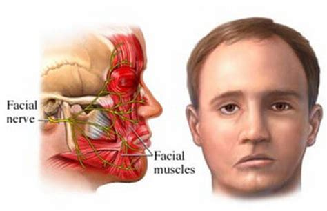 Orbicularis Oculi Muscle - (Origin and Insertion) and Function