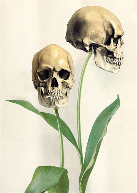 Skull Flowers Skulls Fan Art Fanpop