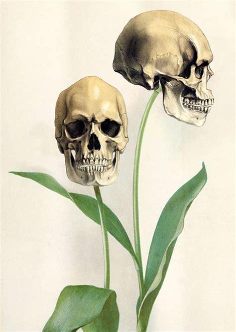 Skull Flowers Skulls Fan Art Fanpop