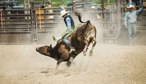 dont  professional bull riders  roanoke berglund cars