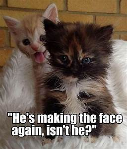 KITTEN QUOTES image quotes at relatably.com