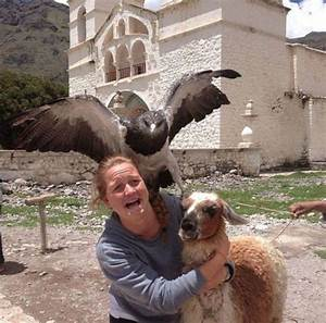 30 Hilarious Animal Photobombs That Are Absolutely Purrfect