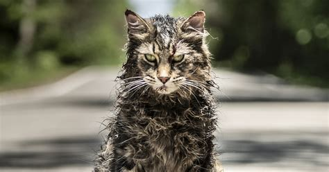 'pet Sematary' Trailer Debuts Online  Watch Now! Amy