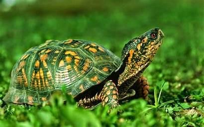 Turtle Sea Wallpapers Earth