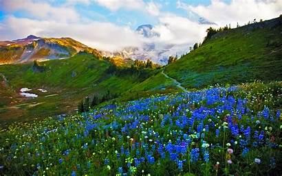 Spring Landscape Flowers Meadow Mountain Wallpapers Flower