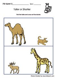 taller  shorter worksheets activity sheets  kids