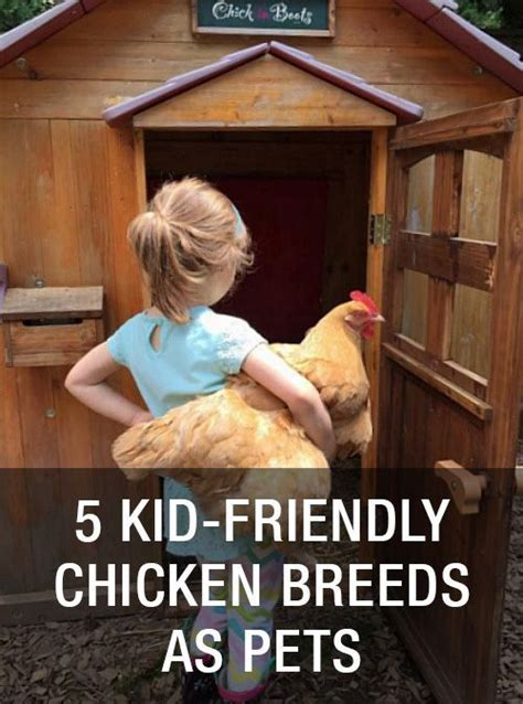 kid friendly chicken breeds chicken breeds pets and chicken on pinterest