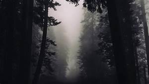 4k, Gothic, Forest, Wallpaper