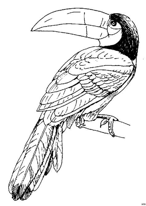 tukan gedrehter kopf ausmalbild malvorlage tiere